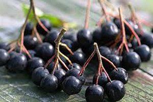 Собранная черноплодка