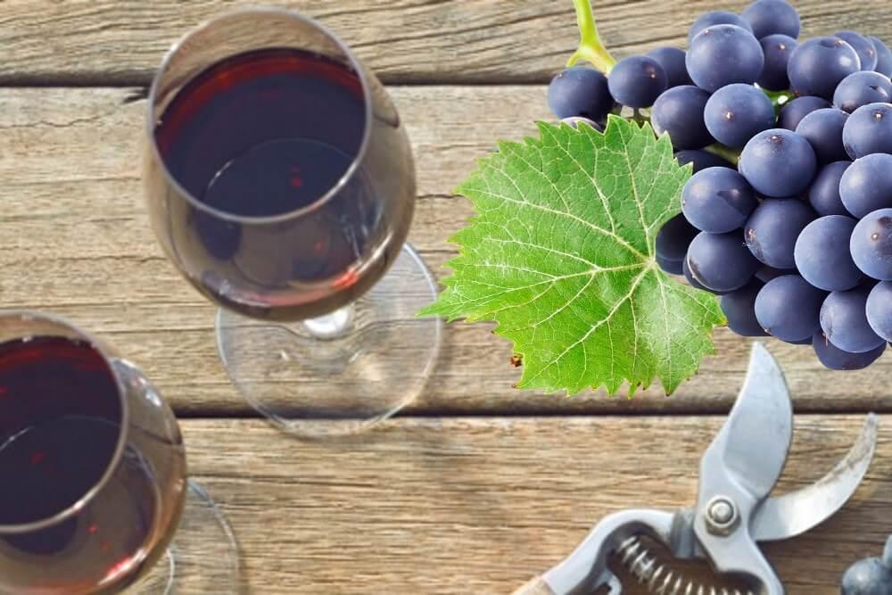 напитки из винограда изабелла в домашних условиях
