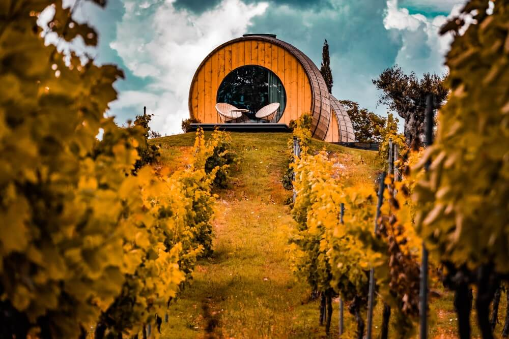 Сорта винного винограда