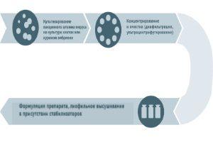 Производство живых вакцин