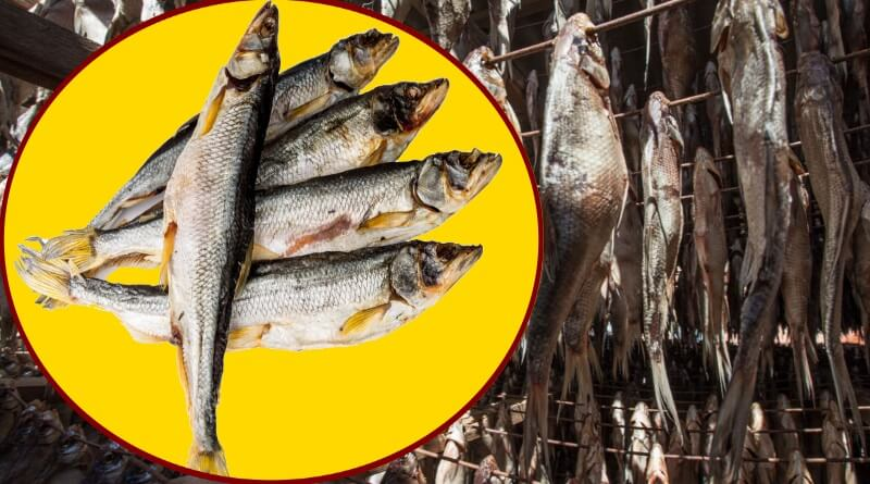 Как сушить рыбу