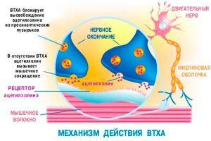 Механизм действия ботокса